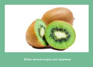 kivi-polza-i-vred-dlya-zdorovya
