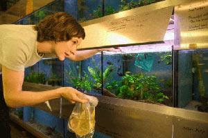 akvarium-i-uhod-za-nim-sovety-nachinayushchim