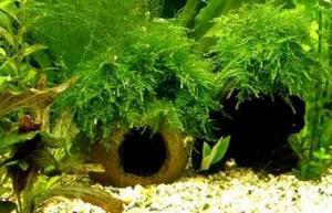 skorlupa-kokosovyh-oreshkov-dlya-akvariuma