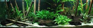 stebli-bambuka-i-trostnika-dlya-akvariuma