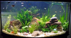 ukrasheniya-iz-kamnej-svoimi-rukami-v-akvarium
