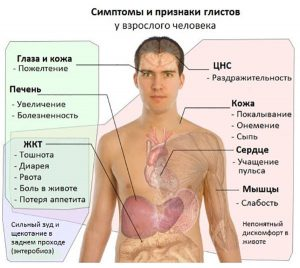 Признаки в организме человека наличия паразитов