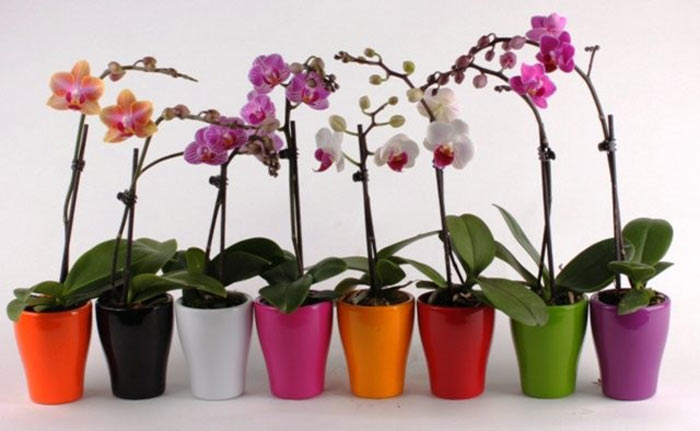 как ухаживать за цветами орхидеи