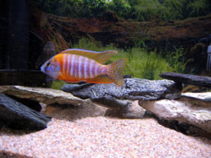 gravij-i-pesok-v-akvarium