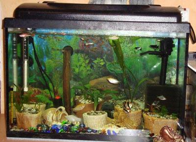 Как сделать украшения своими руками для аквариума