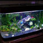 Как украсить аквариум в домашних условиях