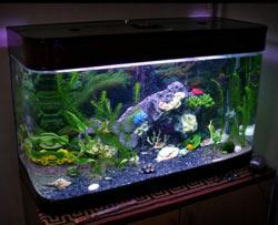 kak-ukrasit-akvarium-v-domashnih-usloviyah