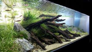 koryagi-dlya-akvariuma