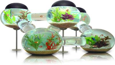 neobychnye-formy-akvariumov