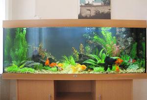 oformlenie-akvariuma-iskusstvennymi-rasteniyami