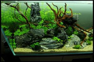 oformlenie-akvariuma-koryagami