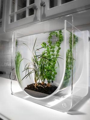 originalnye-formy-akvariumov