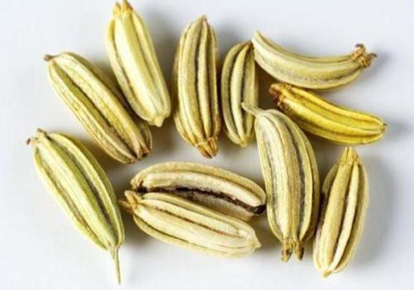semena-fenhelya-poleznye-svojstva