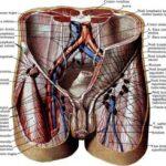 Воспаление лимфоузлов в паху у мужчин (причины)