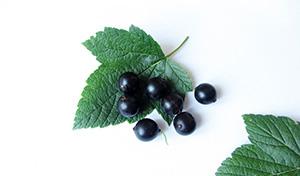 poleznye-svojstva-i-protivopokazaniya-chernoj-smorodiny