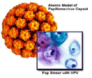 papillomavirusnaya-infekciya-u-muzhchin-lechenie